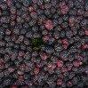 IQF Frozen Blackberry de Variety Hull