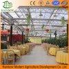 De brede Ecologische Serre van het Blad van het Polycarbonaat van het Polycarbonaat van de Serre van het Restaurant