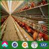 Casa de pollo de la estructura de acero del surtidor de China