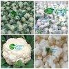Bloem van uitstekende kwaliteit van de Bloemkool van Groenten de IQF Bevroren