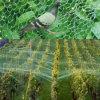 反鳥の網を得る最も強いプラント保護プラスチックPE