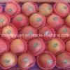 Buena calidad Qinguan fresco chino Apple