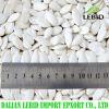 Gérmenes de calabaza blancos como la nieve de la nueva cosecha china para la exportación