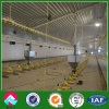 Bon Ventilation Steel Structure Chicken House pour Broilers et Chicken Poultry Shed Design