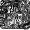 Da pele real da pele do tigre de Tsautop Tscw017 película dos gráficos hidro