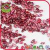Rote gesprenkelte weiße Bohnen groß und klein