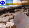 Grado de la alimentación del hierro de la quelación del aminoácido