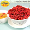Organische Goji Beere Mispel-trockene Fruchtningxia-