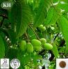 자연적인 최고 산화를 억제하는 올리브 잎 추출 Oleuropein 4%~60%, Hydroxytyrosol 5%-40%