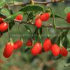 Cuidado médico nativo Wolfberry
