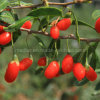 Cuidados médicos nativos Wolfberry