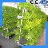 Système hydroponique des légumes et des fruits