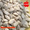 Семена тыквы снежка белые