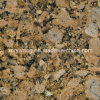 Granite natural Giallo Fiorito Granite para Tile