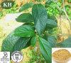 Acide chlorogénique Eucommia Ulmoides d'extrait normal de 100% pour l'alimentation