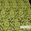 Cordón, cordón tejido ganchillo de la tela de algodón del cordón de los accesorios de la ropa, L257