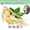 80% Ginsenoside reiner natürlicher Ginseng-Stamm-Blatt-Auszug