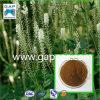 Poudre noire organique de cohosh de 100%
