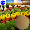 Amminoacido Powder Protein Powder per Organic Fertilizer
