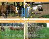 Hot-DIP гальванизированная загородка поля 8ft для Farm&Animals