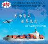 One-Stop Verschepende Dienst van de Logistiek van Xiamen aan Zuidoostelijk Azië