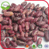 Chinesische rote gesprenkelte weiße Bohnen für Verkauf