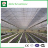 농업 강철 프레임 알루미늄 단면도 Po 필름 온실