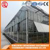 Industrielles galvanisiertes Stahlrahmen-Glas-Gewächshaus