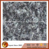 Verd incluso Fountain Granite Stone Tile per Flooring Material