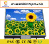 Display LED para placa LED Display Display