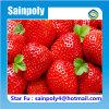Qualität Plastik-Film Gewächshaus für Erdbeere
