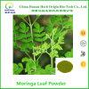 Pó da folha da moringa oleifera, pó maioria de Moringa com amostra livre