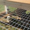 中国の工場安く熱い浸された電流を通された溶接された網