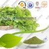 Оптовая продажа Moringa порошка Moringa изготовления высушила цену листьев навальное