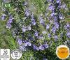 Petróleo de Rosemary natural puro