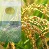 Ácidos aminados satisfeitos orgânicos do fertilizante 52% do pó do ácido aminado