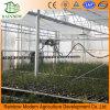 Sistema de irrigación automático grande de regadera para el invernadero