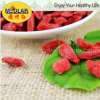 Naturaleza Ningxia Wolfberry del níspero