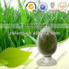 Fabrik Sypply natürliches Gersten-Gras-Puder