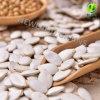 Graines de citrouille blanches de neige chinoise avec 13mm de bonne qualité 14mm 15mm pour rôti