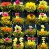 Té floreciente del YUN Nan Dian Cai