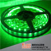 SMD3528 IP65 Drivepipe 방수 30LEDs 녹색 LED 지구