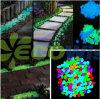 Indicatore luminoso della decorazione dell'acquario del passaggio pedonale del giardino