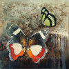 Canvas (LH-127000)の手塗りのButterfly Oil Painting