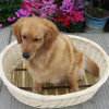 No1! ! ! Fábrica Direct Wholesale Highquality Various Fabric e Pattern Pet Bed