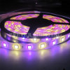 5050SMD impermeabile LED Strip Light