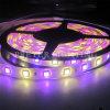 방수 5050SMD LED Strip Light