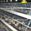 어린 암탉 닭 감금소 병아리 무리 감금소
