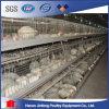 Клетка оборудования цыплятины птиц цыпленка на надувательстве