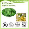 Estratto di erbe della pianta dell'estratto dell'olio di rosmarino dell'estratto della Rosemary